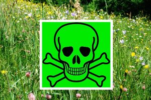 Glyphosat in der Kritik