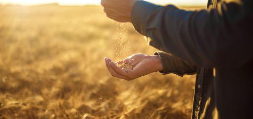 Wertschaetzung-Landwirtschaft